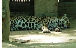 Click to visit my Delhi zoo website